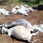 Thunder Strikes in Ekiti, Kills 15 Cows